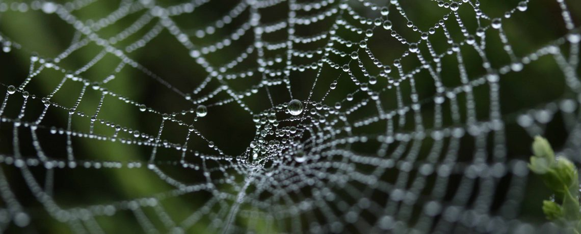 Weave a Web